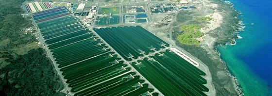Algenproduktion für Hawaiian Spirulina und Astaxanthin auf Hawaii