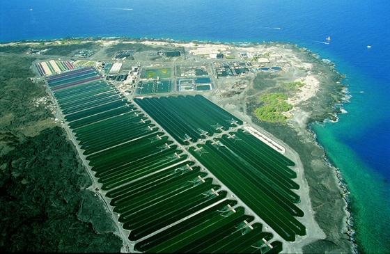 Algenproduktion für Astaxanthin auf Hawaii.