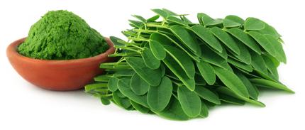 Moringa Oleifera Pulver kaufen und mehr über Moringa erfahren