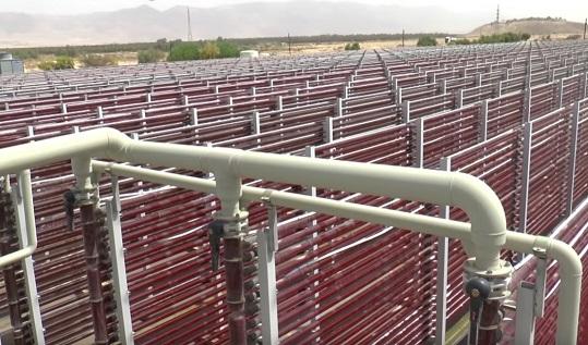 Die Anlage von Algatechnologies mit den roten Algen in den Glasröhren